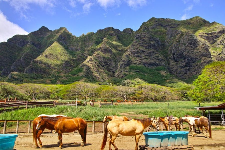 Kualoa is a working cattle ranch that offers horseback rides